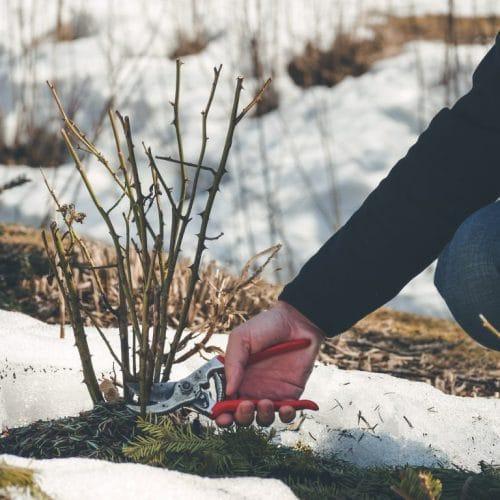 In simpele stappen een mooie wintertuin