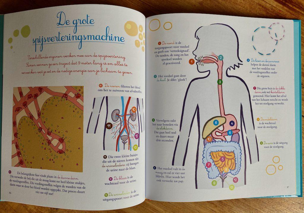 zo werkt het menselijk lichaam